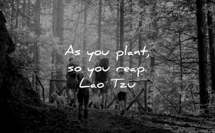 lao tzu quotes plant reap wisdom nature forest family walk