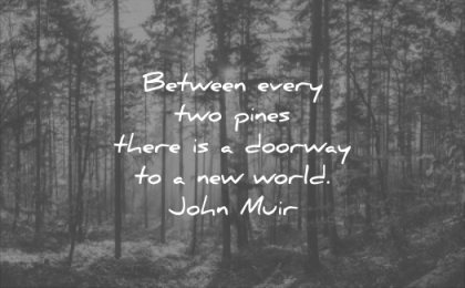 nature quotes between every two pines there doorway new world john muir wisdom trees forest woods