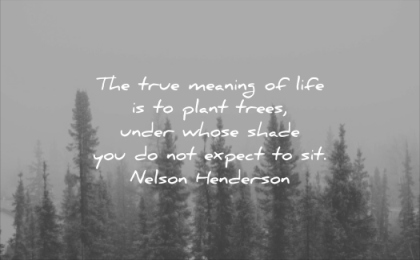 quotes to live by true meaning life plant trees under whose shade you not expect sit nelson henderson wisdom trees forest calm pines