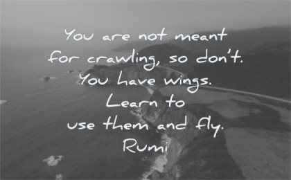 rumi quotes you not meant crawling dont have wings learn use them fly wisdom nature water