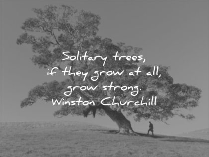 short quotes solitary trees they grow all strong winston churchill wisdom