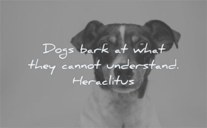 stress quotes dogs bark they cannot understand heraclitus wisdom